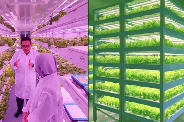Tanpa gunakan tanah, usahawan ini buka ladang sayur menegak dalam kontena