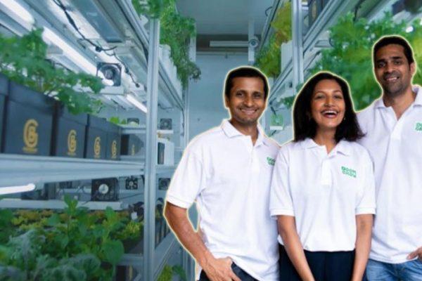 Sayur luar negara tumbuh di Ampang. Kisah tiga sekawan bina ladang sayur berteknologi AI